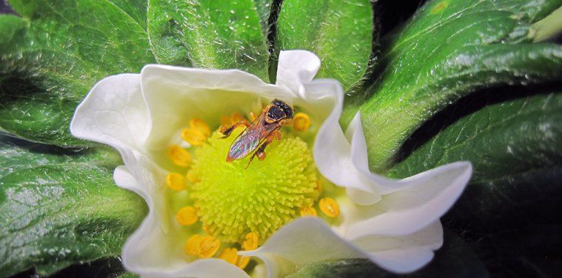 Ciência Cidadã trilha o caminho das flores na Chapada Diamantina