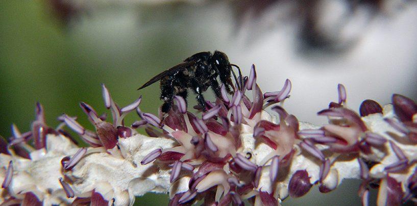 Fundação Grupo Boticário premia projetos de conservação das abelhas