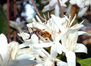 Aluguel de colmeias traz lucro e aumenta produção de café no ES