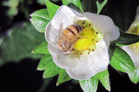 Curso do Instituto Biológico ensina importância ecológica das abelhas