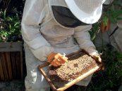 São Luiz do Paraitinga promove Feira de Apicultura Sustentável