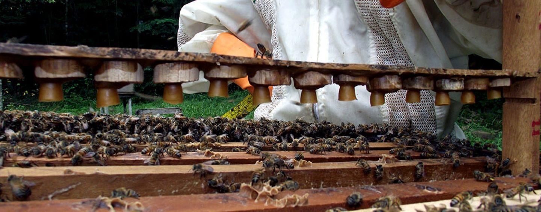 Humanos já consumiam mel 9 mil anos atrás
