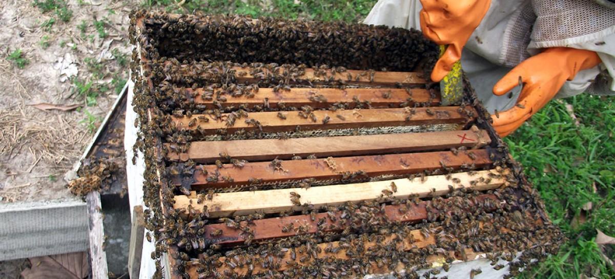 Apicultura avança em Quilombo e beneficia produtores