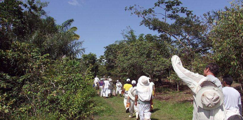 Apicultores chegam a produzir 400 toneladas anuais de mel no Espírito Santo