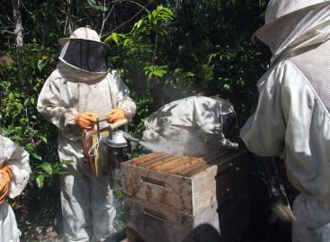 Frente Parlamentar defende interesses de criadores de abelhas