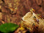 Emater investe para ampliar a presença de abelhas na agricultura