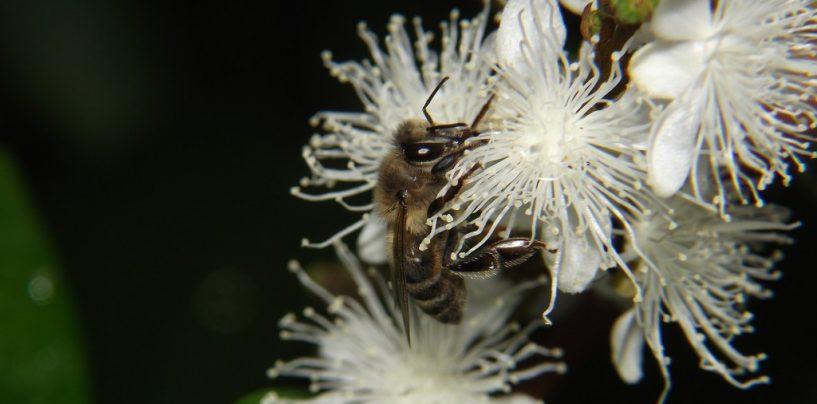 Cientistas desvendam a 'dança' das abelhas