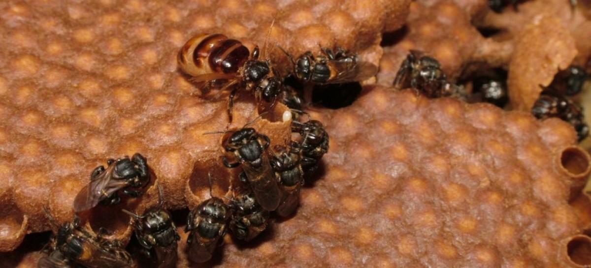 """Odor específico funciona como """"código de barras"""" para abelhas"""