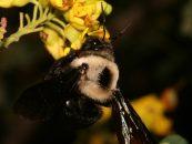 Saiba mais sobre o Projeto Polinizadores do Brasil