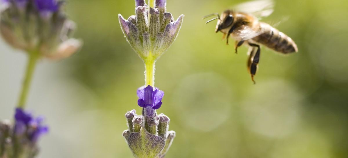 Estados Unidos anunciam plano para conservar abelhas