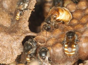 Jardim Botânico do Rio inaugura projeto de criação de abelhas sem ferrão