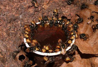 Instituto Biológico debate polinização e apicultura