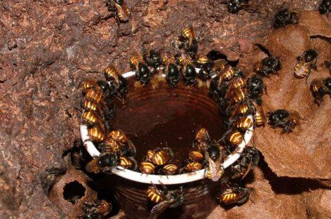 Oficina sobre criação de abelhas sem ferrão é ministrada em Belém