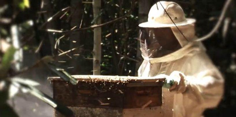 Pesquisador dá dicas para manter produção de mel em climas extremos