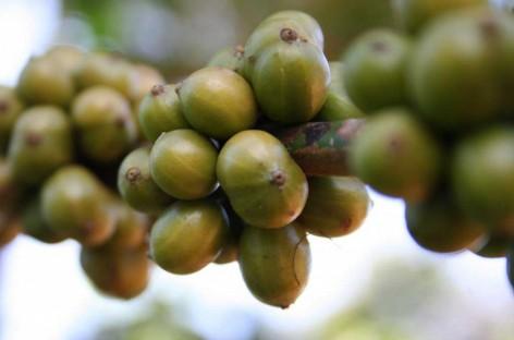 Estudo avalia o valor econômico da polinização para culturas agrícolas no Brasil