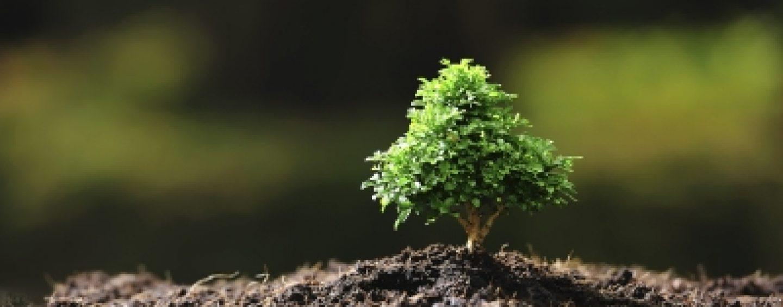 Conhecimento dos brasileiros sobre biodiversidade é destaque em pesquisa