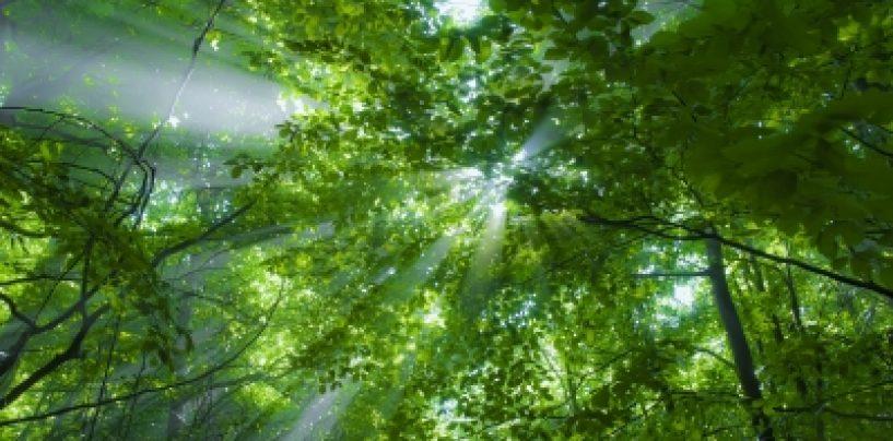 Estudo avalia biodiversidade nas florestas e nas paisagens agrícolas
