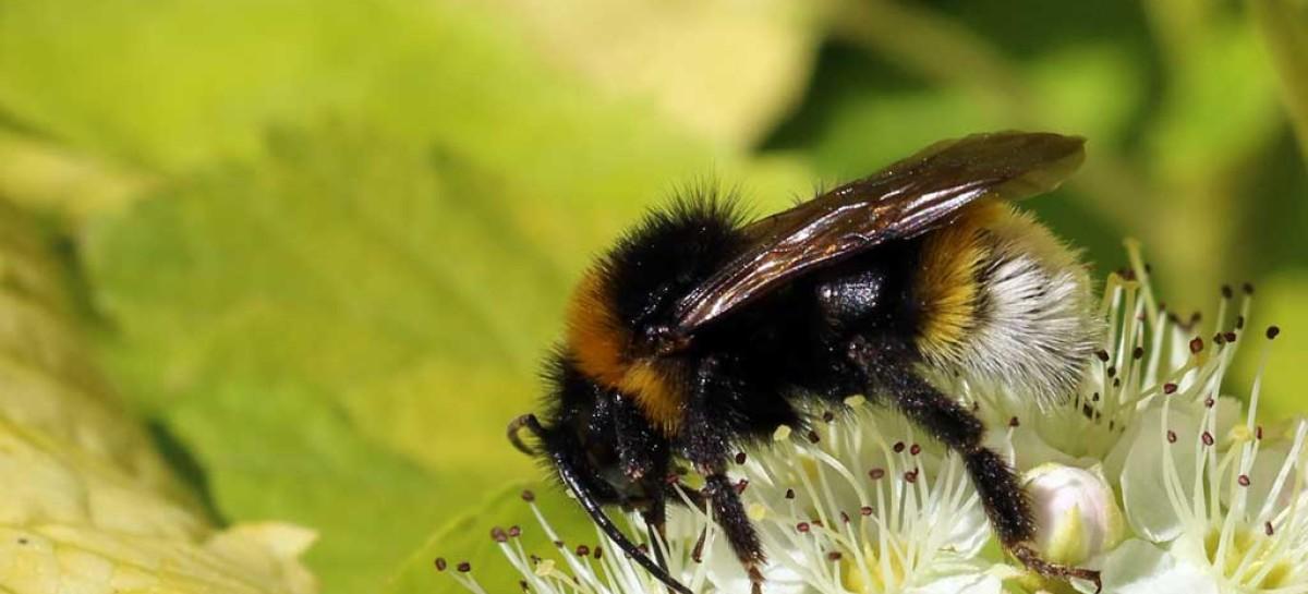 """Cientistas conseguem """"adestrar"""" abelhas"""