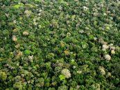 A importância das abelhas na conservação das florestas