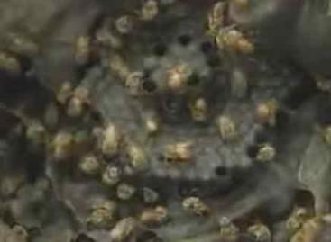 Produção de mel de abelhas sem ferrão