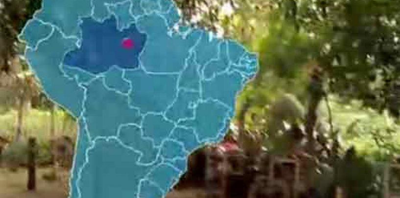 Abelhas meliponas ajudam no reflorestamento de parques – Parte 2