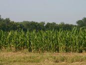 28 de julho, Diado Agricultor