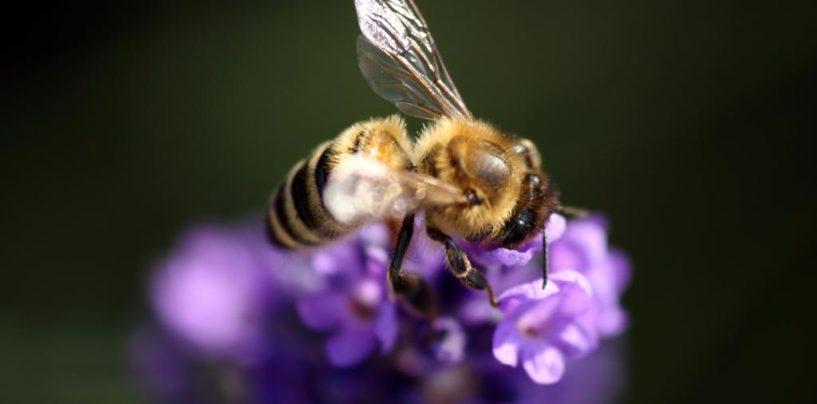 Animação faz alerta sobre o desaparecimento das abelhas