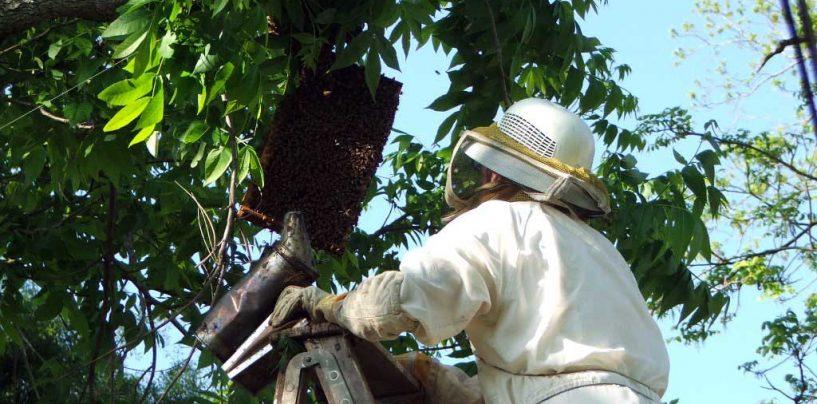 Veterinários e zootecnistas contribuem para a apicultura no Brasil