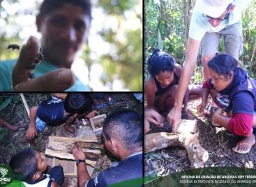 Reserva no Pará incentiva criação de abelhas sem ferrão