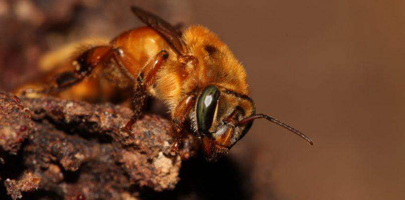 Especial sobre abelhas na Sociobiology