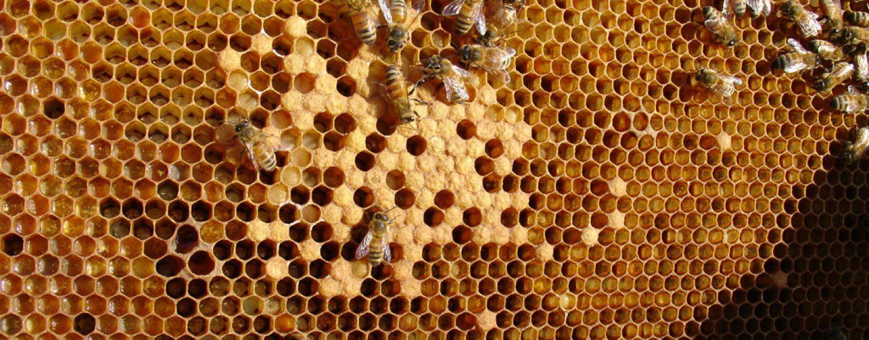 Cera de abelha: oportunidade de novos negócios para o pequeno apicultor
