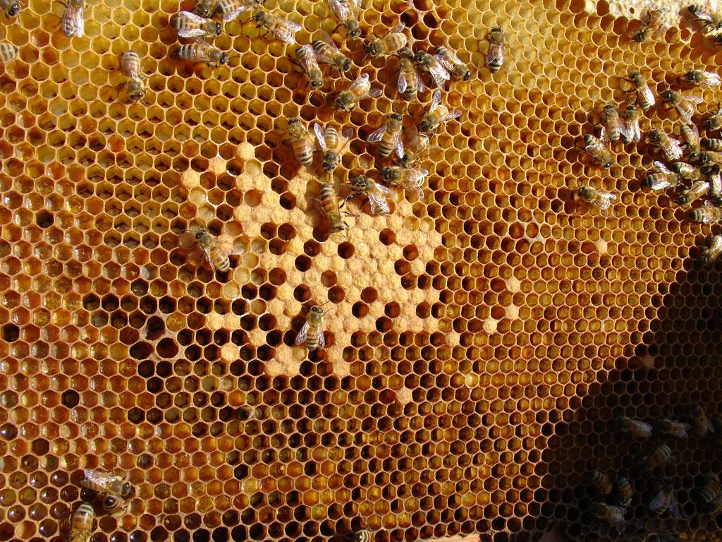 Cera de abelha é oportunidade de novos negócios para o apicultor