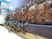 Projeto da Fiemg beneficia cerca de 300 apicultores no Jequitinhonha