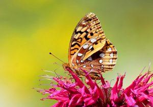 borboleta-1024