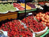 População desconhece a importância da polinização para a produção de alimentos
