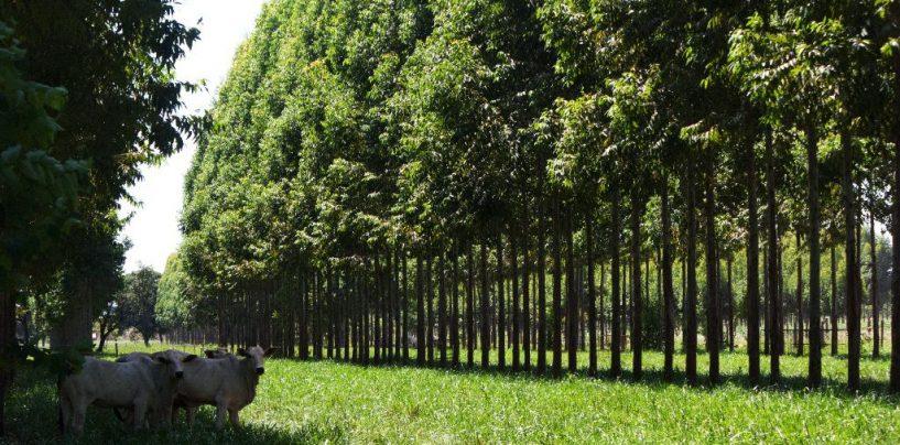 O que o Brasil vai propor na COP 21
