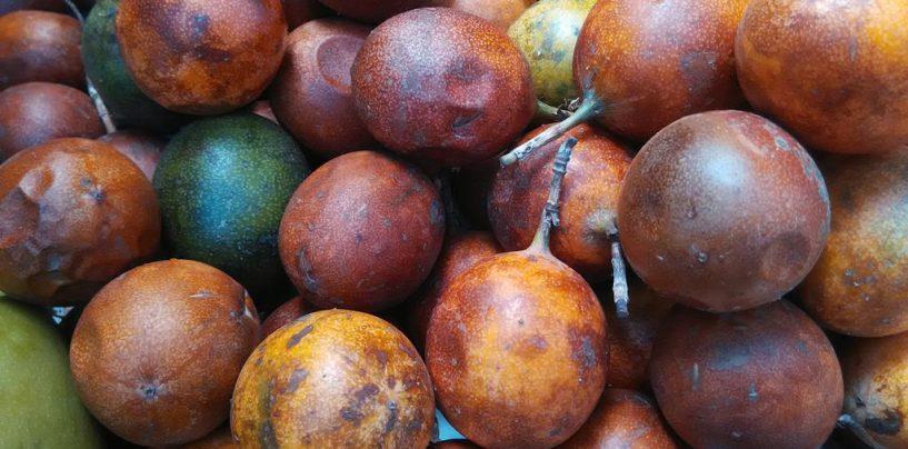 Produção de mamangava reforça o cultivo de maracujá