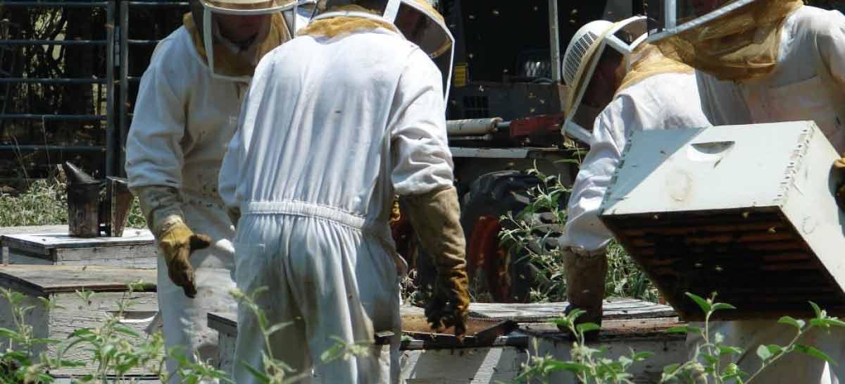 Projeto de lei prevê normas próprias de inspeção para a apicultura