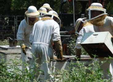 Projeto de lei na Câmara dificulta criação de abelhas, critica CNA