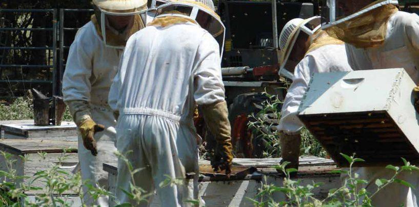 Codevasf vai fortalecer o trabalho de apicultores do Norte de Minas