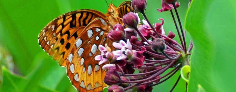 Fiocruz reabre borboletário no Rio de Janeiro