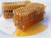 Sul de SC tem prejuízo de 400 toneladas na produção de mel
