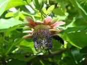 Embrapa realiza dia de campo sobre abelhas sem ferrão e agroecologia