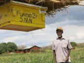 Fazendeiros africanos usam colmeias para preservar agricultura e elefantes