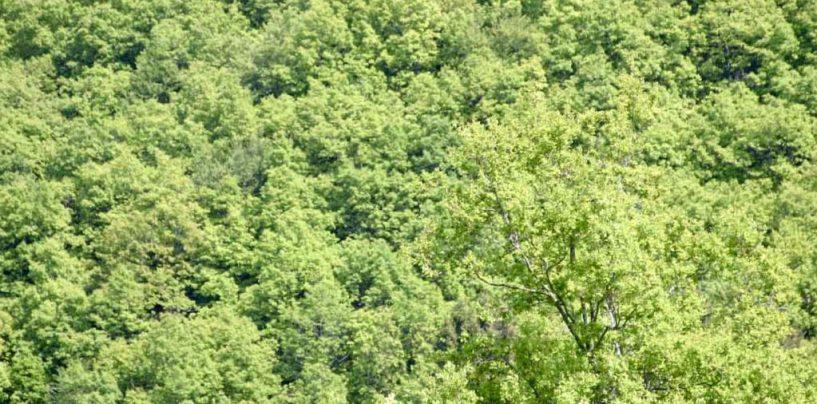 Presença de abelhas em áreas mineradas de xisto aponta recuperação ambiental