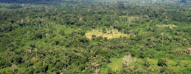 """Floresta regenerada é """"esponja"""" de carbono"""