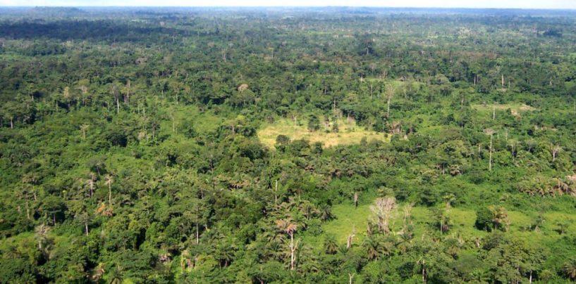 Países firmam acordo pela restauração de florestas na COP-21