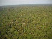 Ação humana pode dobrar a perda de biodiversidade