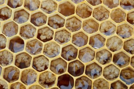 Cooperativa paranaense quer triplicar produção de mel em três anos