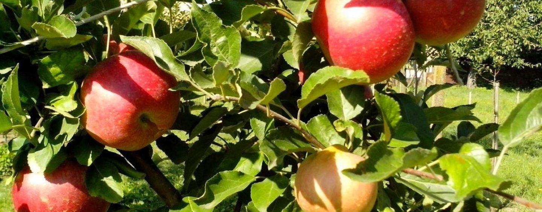 CCJ aprova proposta que permite uso de árvores frutíferas na recomposição de APPs